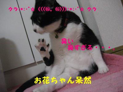 IMG_1296.jpg