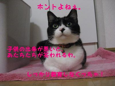 IMG_1303.jpg