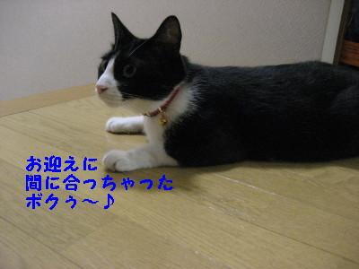 IMG_1333.jpg