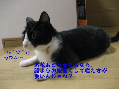 IMG_1337_20080825110456.jpg