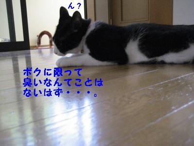 IMG_1370.jpg