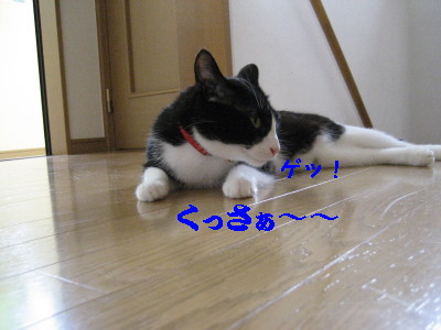 IMG_1382.jpg