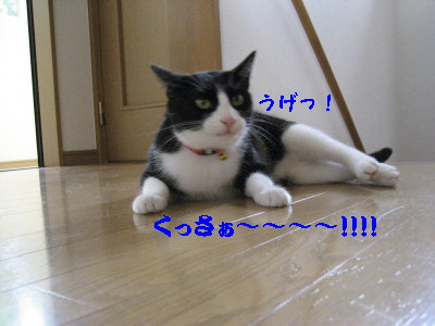 IMG_1385.jpg