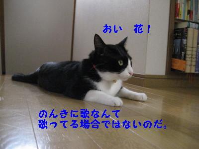 IMG_1406.jpg