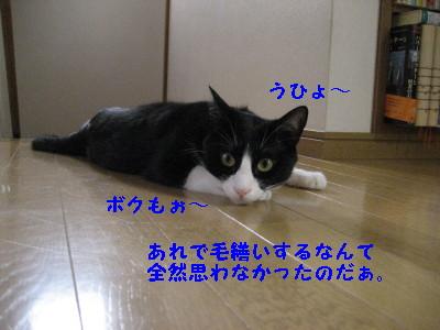 IMG_1408.jpg