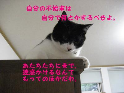 IMG_1423.jpg
