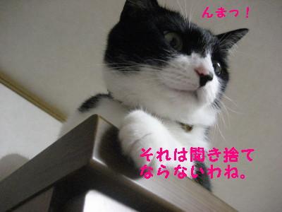 IMG_1428.jpg