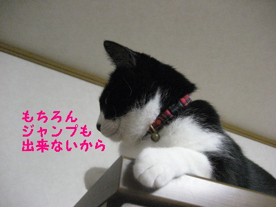 IMG_1431.jpg