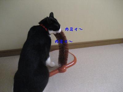 IMG_1437_20080828104457.jpg
