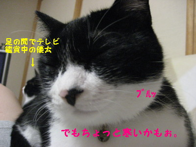 IMG_1511_20080829111431.jpg