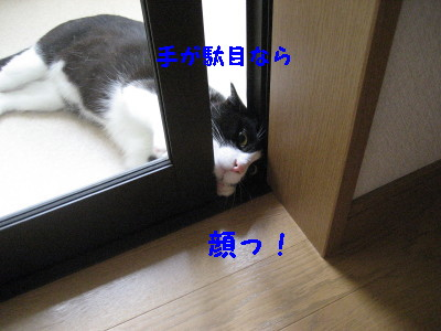 IMG_1558.jpg