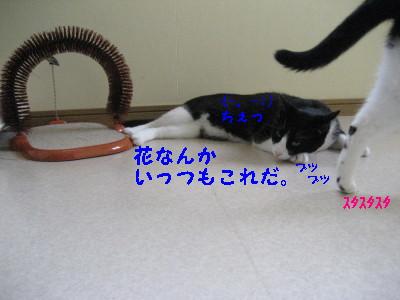 IMG_1587.jpg