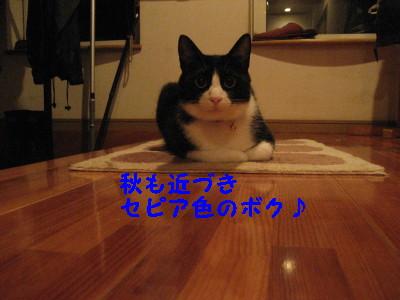 IMG_1631.jpg