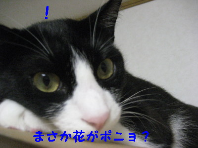 IMG_1648_20080905110344.jpg