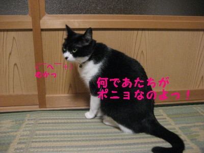 IMG_1718.jpg