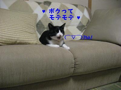 IMG_1806.jpg