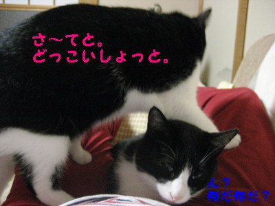 IMG_1951_20080930104935.jpg