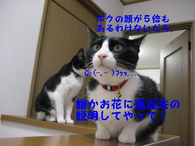 IMG_2037.jpg