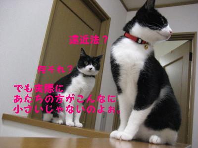 IMG_2041.jpg