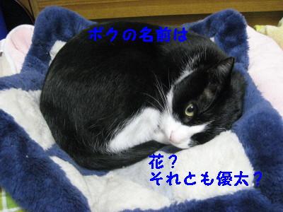 IMG_2045_20081006112819.jpg