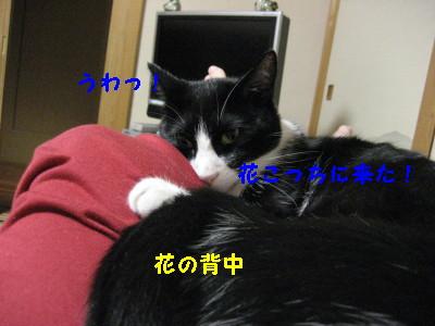 IMG_2153.jpg