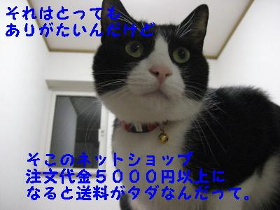 IMG_2189_20081010130300.jpg