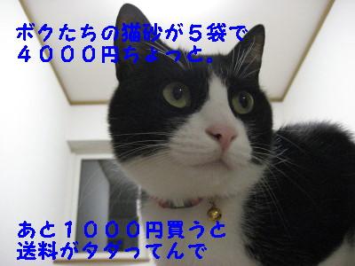 IMG_2190_20081010130307.jpg