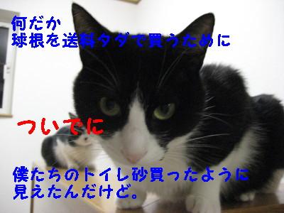 IMG_2193_20081010130341.jpg