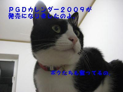 IMG_2194_20081024085605.jpg