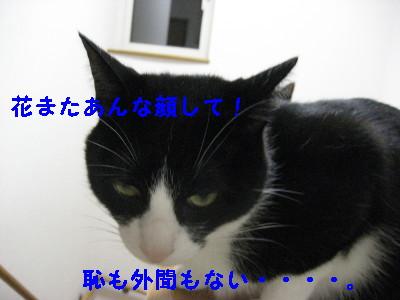 IMG_2197_20081010130402.jpg