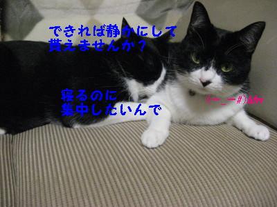 IMG_2273.jpg
