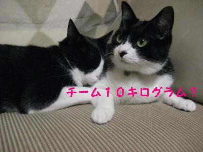 IMG_2275.jpg