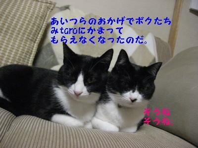 IMG_2335.jpg