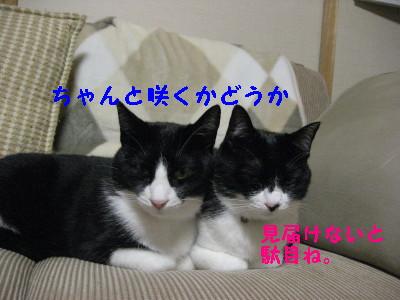 IMG_2336.jpg