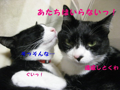 IMG_2377_20081018103937.jpg