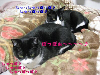 IMG_2396_20081015100406.jpg