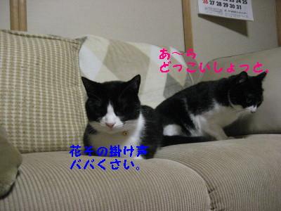 IMG_2428.jpg