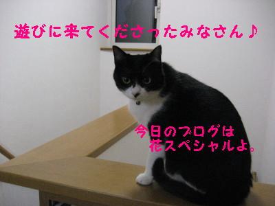IMG_2460_20081022104332.jpg