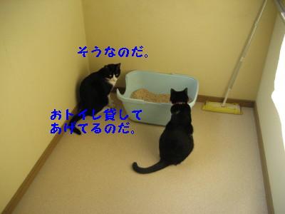 IMG_2514_20081020094707.jpg
