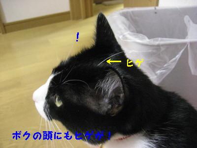 IMG_2556_20081024085719.jpg