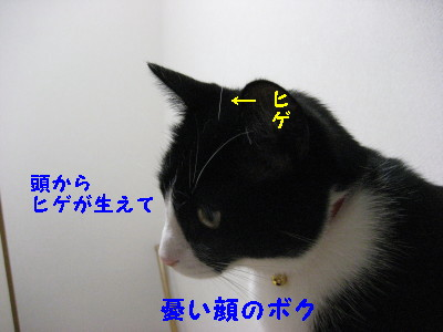 IMG_2559_20081024085725.jpg