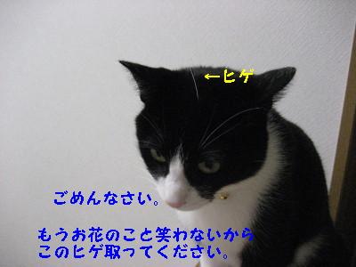 IMG_2560_20081024085730.jpg