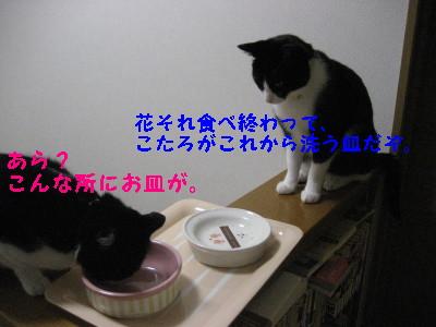 IMG_2562_20081023095633.jpg