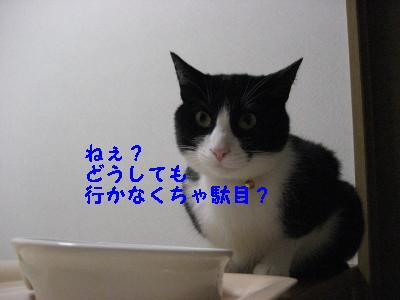 IMG_2584_20081023095708.jpg