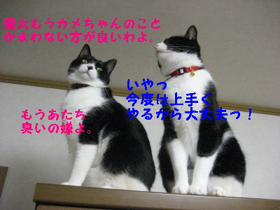 IMG_2619.jpg