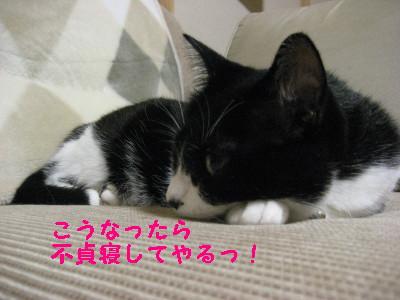 IMG_2685.jpg