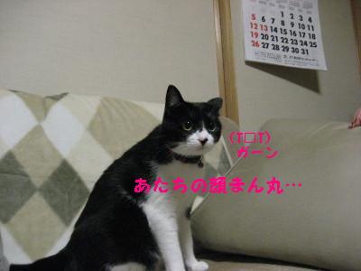 IMG_2689.jpg