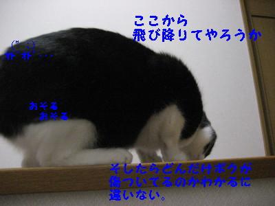 IMG_2699.jpg
