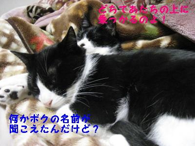 IMG_2835.jpg
