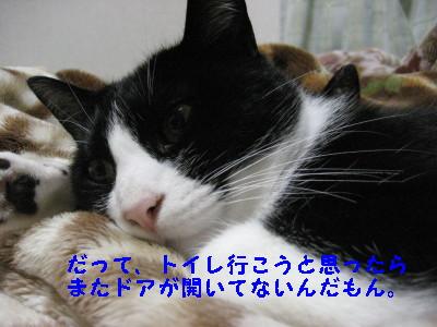 IMG_2836_20081114103115.jpg